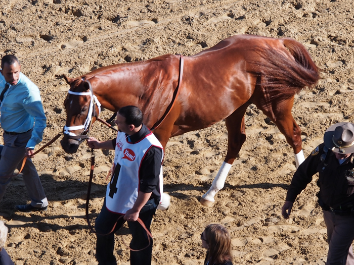 Walking the horses to ready them for the Kentucky Derby race. (Photo (c) Roberta Naas)
