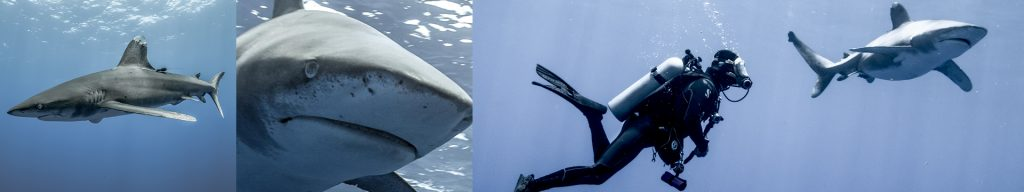 Oris teams with Jerome Delafosse for special project to study hammerhead sharks.