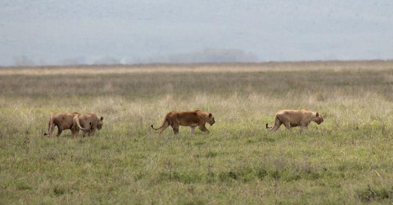 on safari in Tanzania (photo(C) Samantha Walsh)