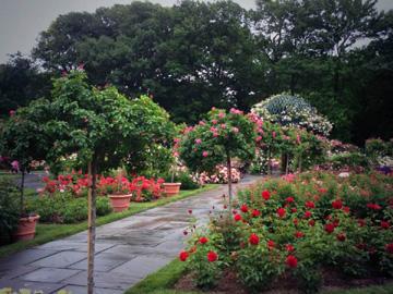 New York Arboretum