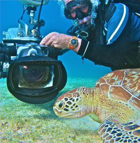 underwater (c) David Hannan