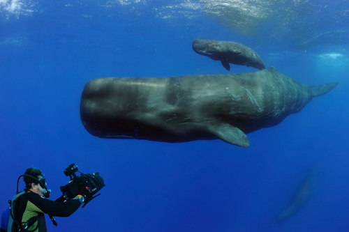 Underwater picture from the Planet Ocean film; (C) Andrew-Harcourt