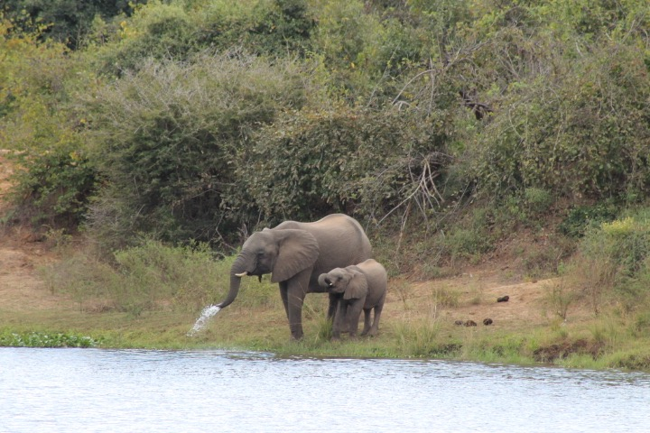 Peace Parks Foundation will monitor the relocated elephants to ensure they thrive.