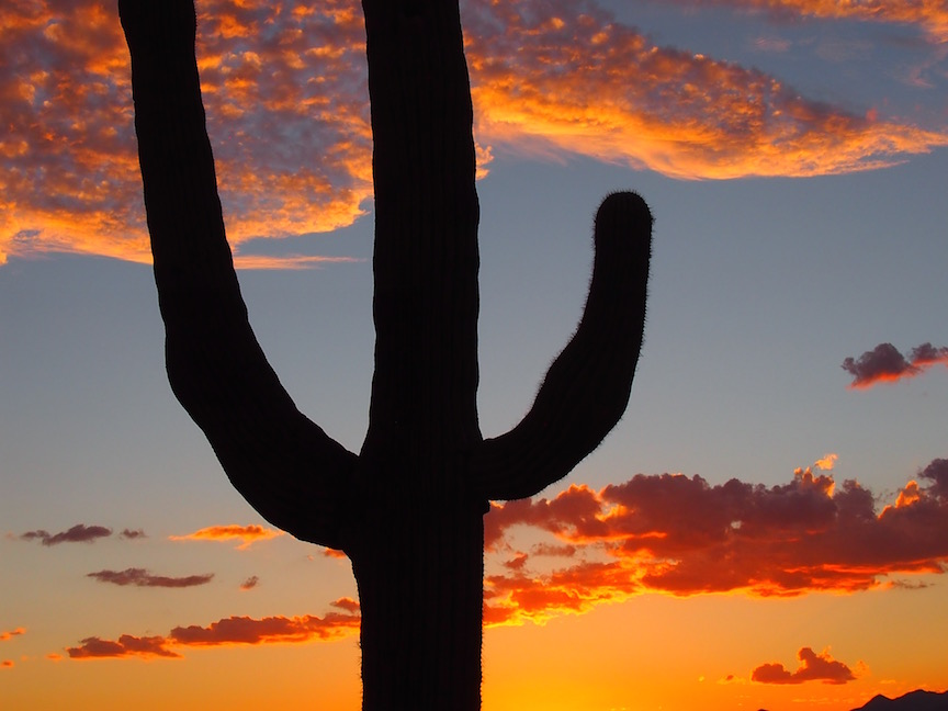 Sunset in the Sonoran desert (photo: R. Naas