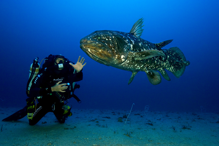 Blancpain supports the efforts of Laurent Ballesta, seeker of sea creatures.