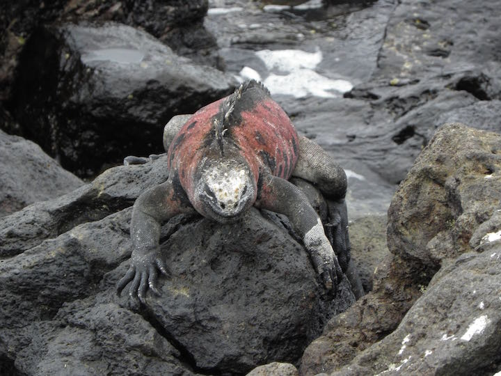 The Galapagos has a unique ecosystem.