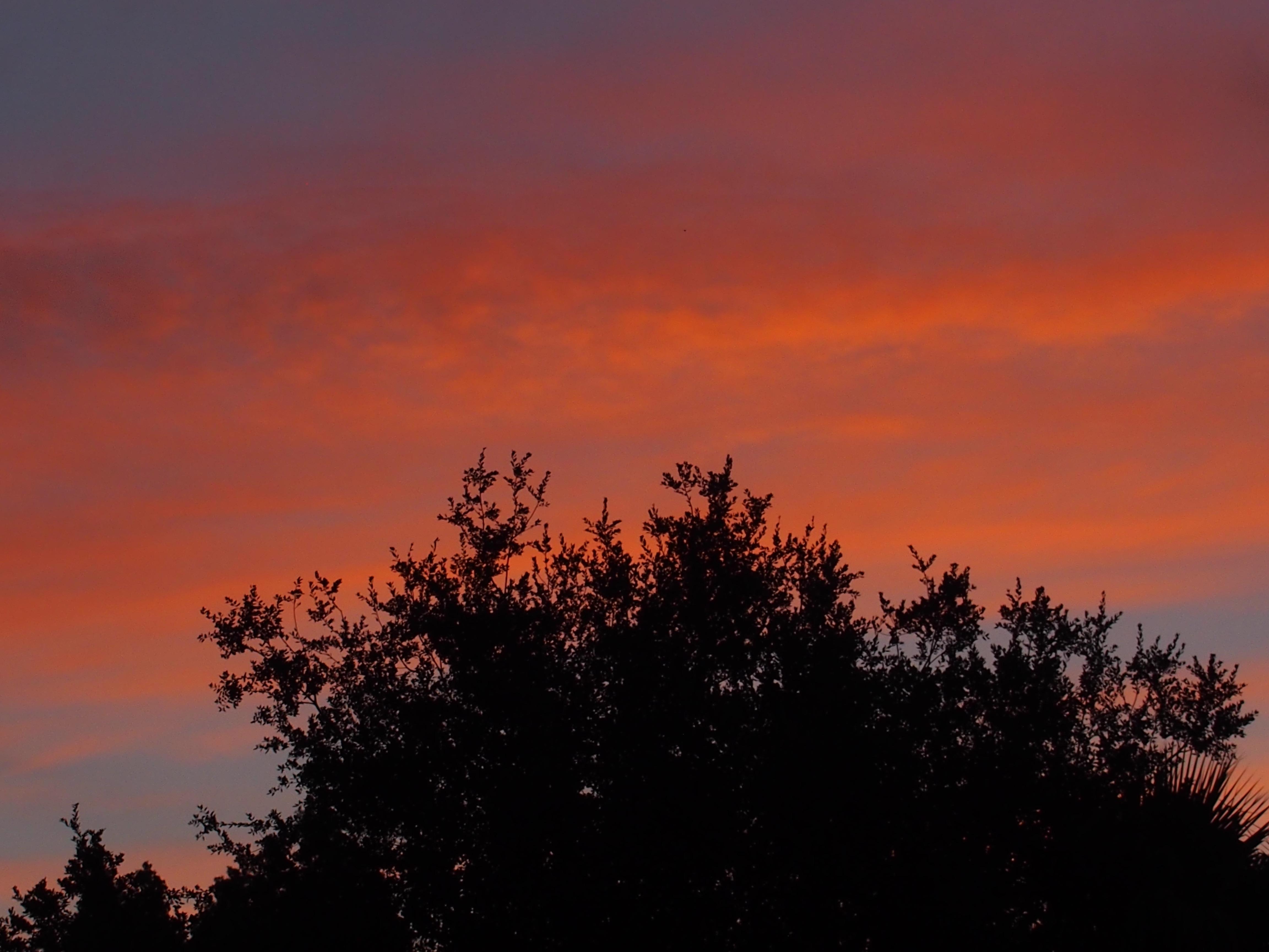 Sunrise in Yountville