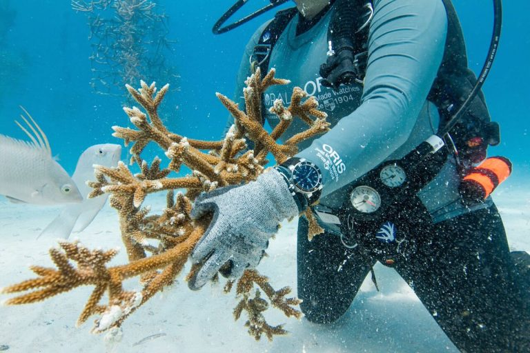 We were invited by Oris to visit with the Coral Restoration Foundation and experience their work first hand.