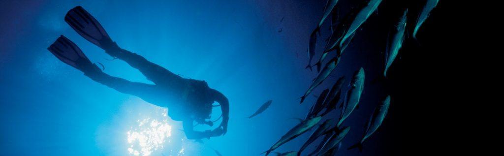 Rolex ocean explorers.