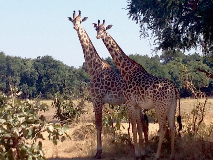 Game drives yield amazing sights in Zambia (photo: R.Naas/ATimelyPerspective)