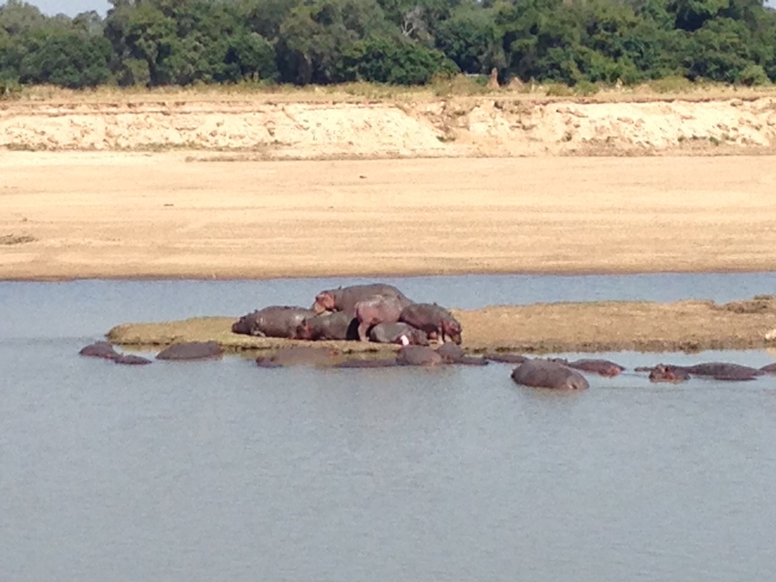 Hippos at rest on the water and mud islands in the river (photo: R.Naas/ATimelyPerspective)