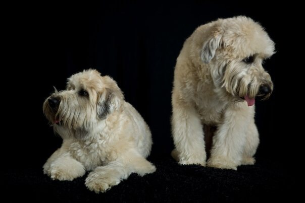 This was the photo that my friend submitted of his dogs for the watch dial.