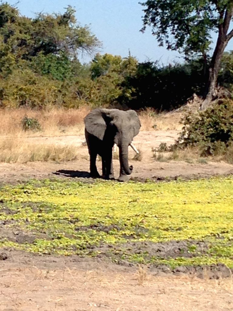 A lone elephant at a watering hold (photo: R.Naas/ATimelyPerspective)
